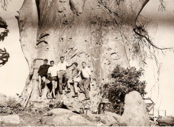Imbondeiro en el lago Niassa, Mozambique en 1964 - Alfredo Henriques.